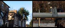 palm trees of hackney von christina ciupke