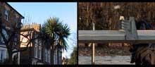 palm trees of hackney von christina ciupke